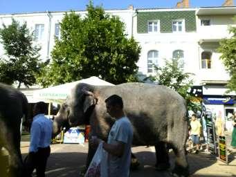 Слон на улице. Хмельницкий